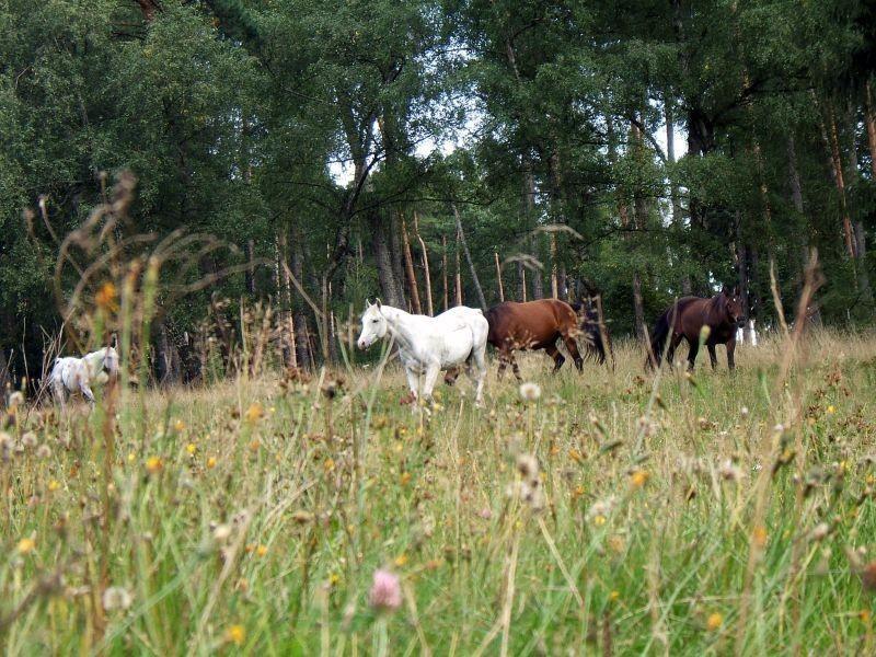 kräuterreiche, pferdegerechte Koppeln