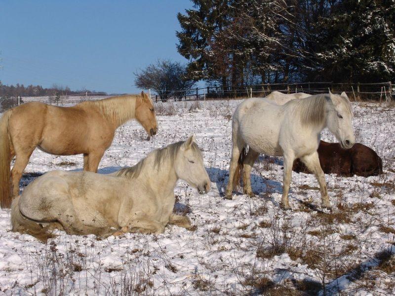 auch im Schnee das reinste Pferdevergnügen
