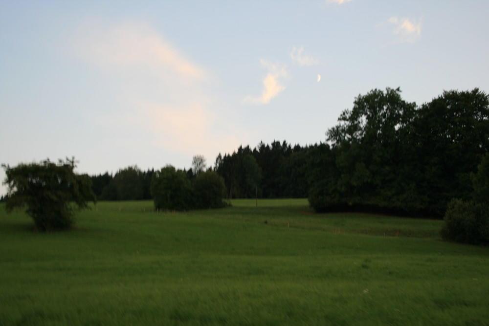 ein Teil der 50 ha Weiden