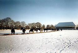 Große, trockene Winterweiden
