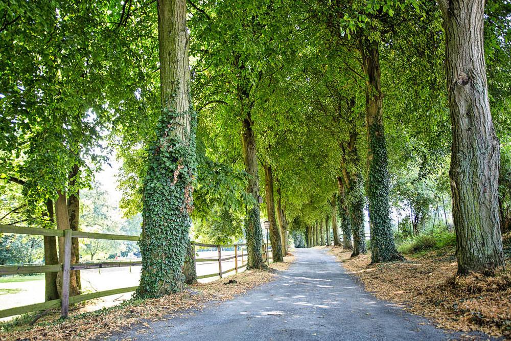 Zufahrt mit Lindenallee