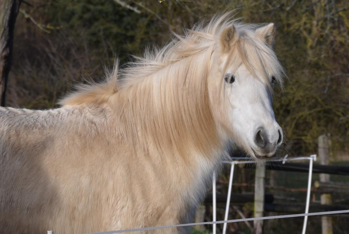 Happy 26. Birthday my Little Pony!