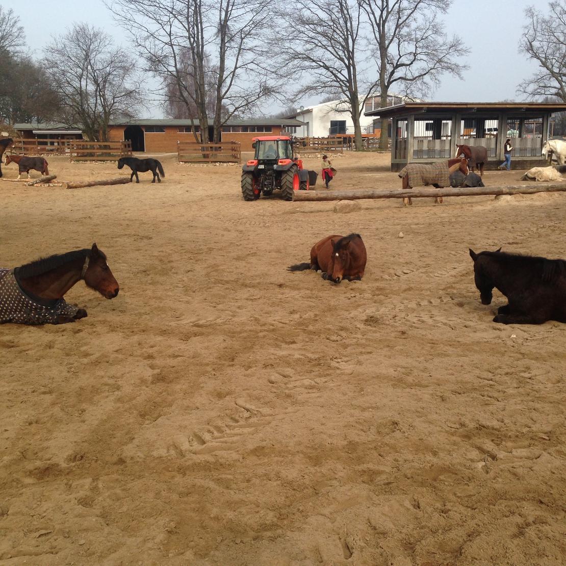 Entspannte Pferde