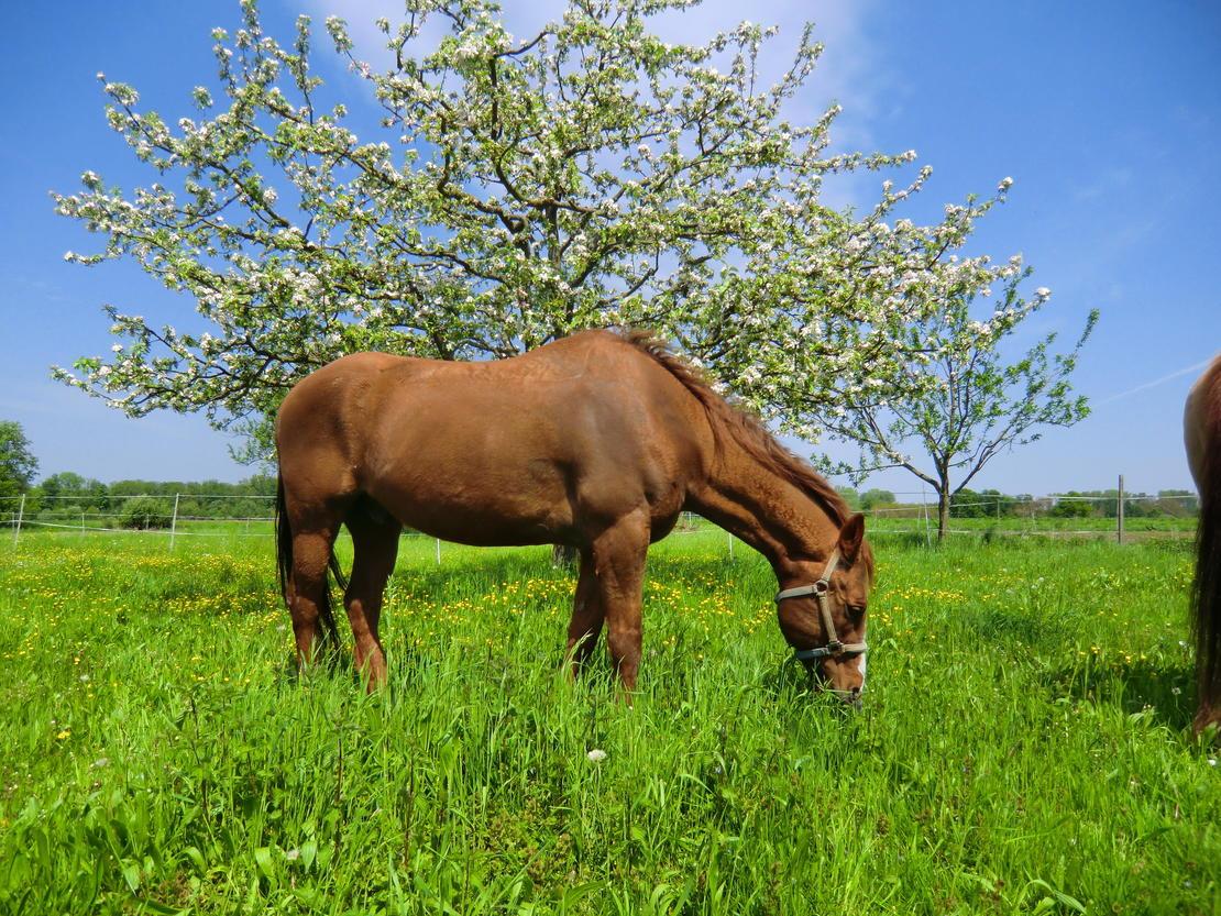 Im Frühjahr auf der Weide