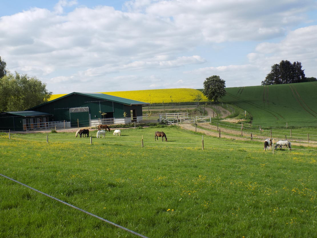Ponylaufstall/Longierhalle/Ponyweide