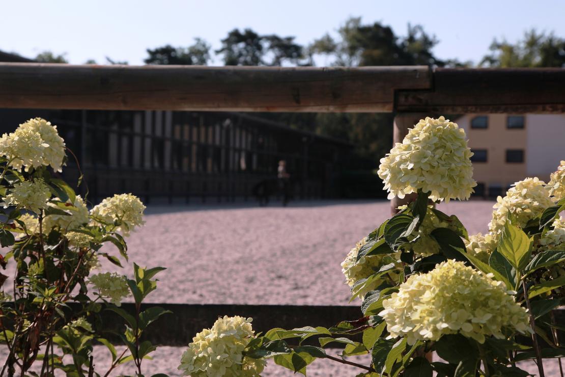 Reitplatz 30m x 90m Quarzsand mit Vlies Allwetter