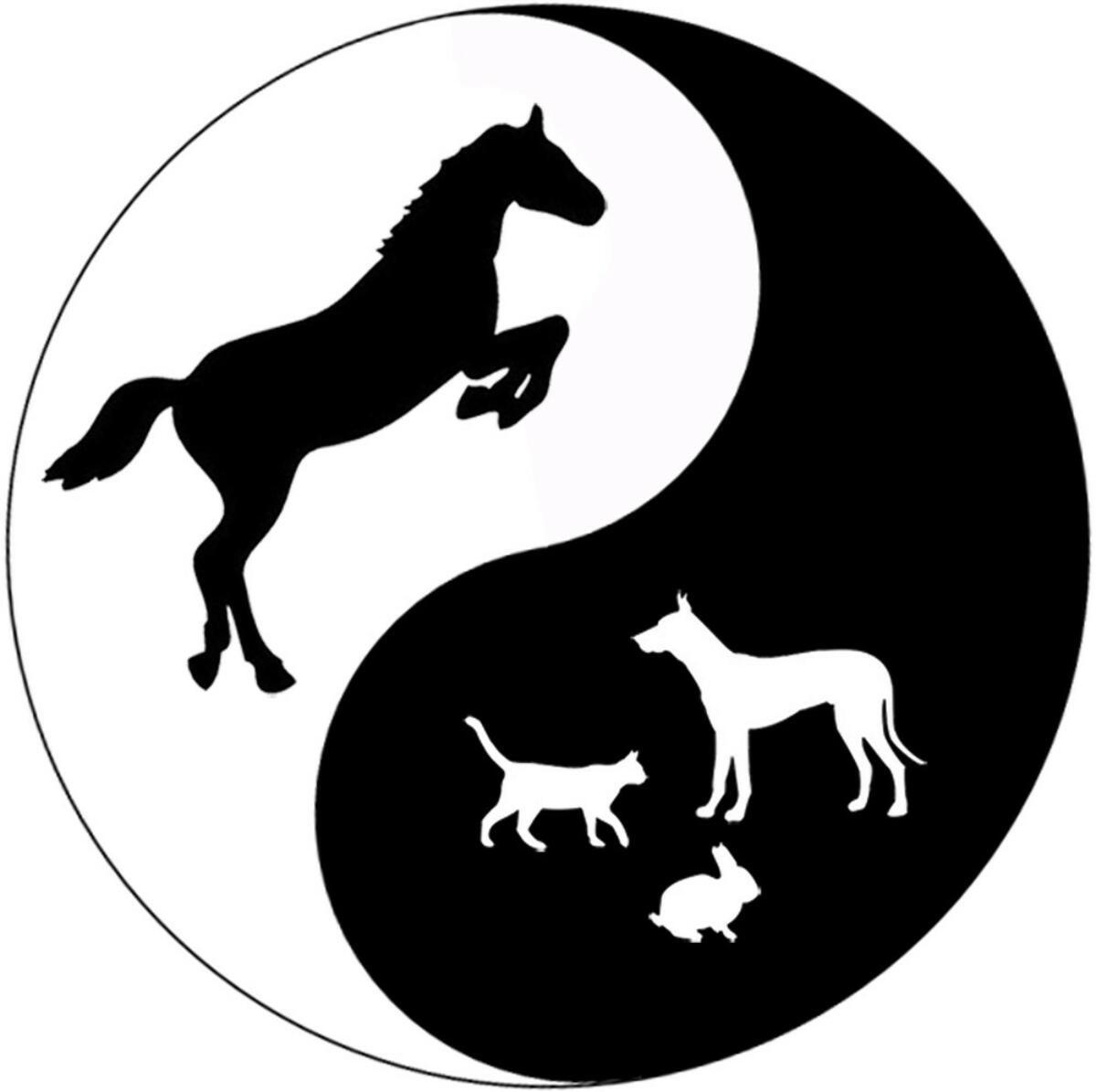 physiotherapie und naturheilkundepraxis f pferde. Black Bedroom Furniture Sets. Home Design Ideas