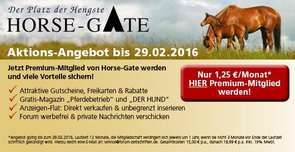 Horse-Gate - Der Platz der Hengste