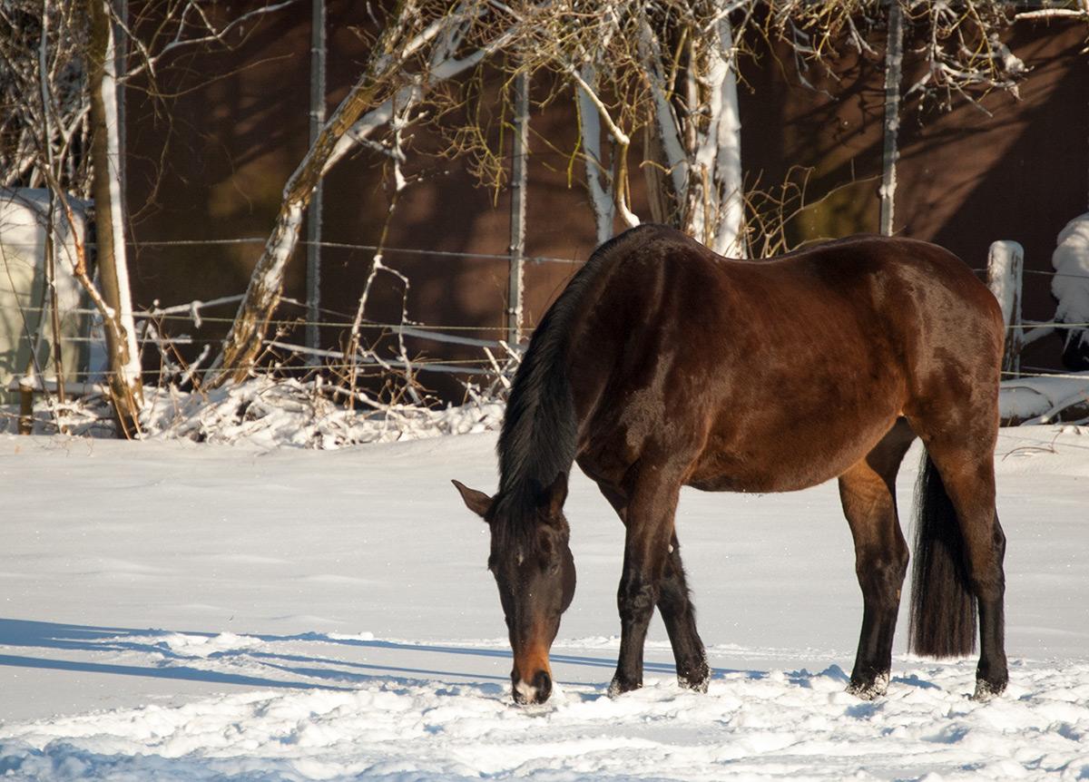 Winter, Winterweide, Weide, Ganzjahresweide, Pferd, Pony, Offenstall
