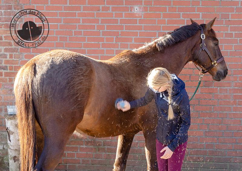 Pferde, Pferdeleben, Fellwechsel, Pferdepflege, Fell