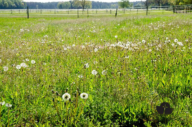 Weide, Koppel, Wallach, Stute, Hengst, Pferde, Pony, Sommerweide, Ganzjahresweide, Offenstall, stall-frei.de