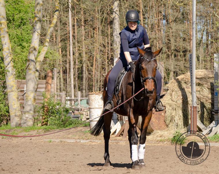 Reitanfänger, Reiten lernen als Erwachsener, Reitkurs, Reitschule, Reiter, Pferd, aufsitzen, Wallach