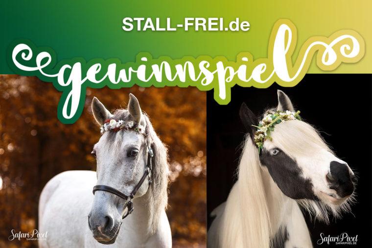 STALL-FREI.de, sweet 16, Geburtstag, 16. Geburtstag, Blütenpferdchen, Stirnriemen, Gewinnspiel, Onlinverzeichnis, Stallverzeichnis, freie Boxen