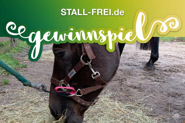 Gewinnspiel, Giveaway, STALL-FREI.de, Panikschlaufe, Pferd, Isländer, Pony, Shetty, Friese, Haflinger, führen, anbinden, Halfter Strick