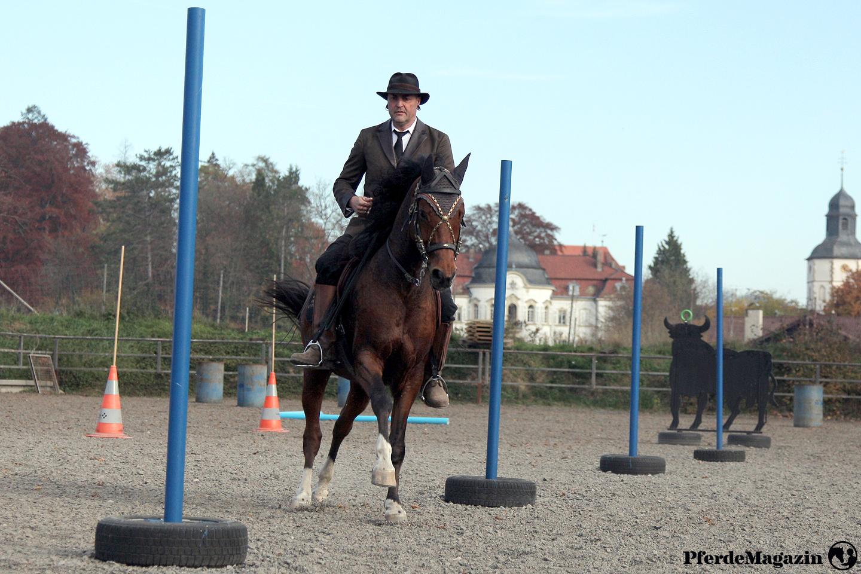 PferdeMagazin, Online-Magazin, Plattform, Vidoes, Artikel, Pferde, Pferdewissen, Reitsport, Pferdeausbildung, Gesundheit, Reiter