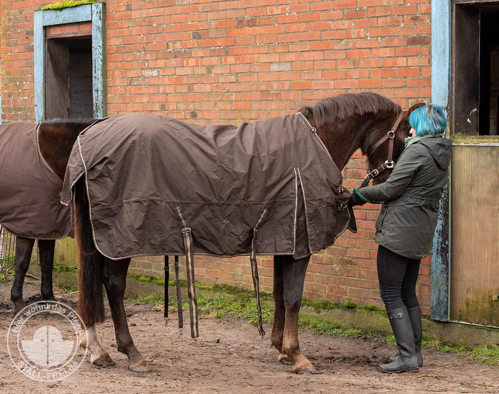 pferde, Pferdeliebe, Pferdedecke, Regen, eindecken, Winter, Herbst, Pferdehaltung