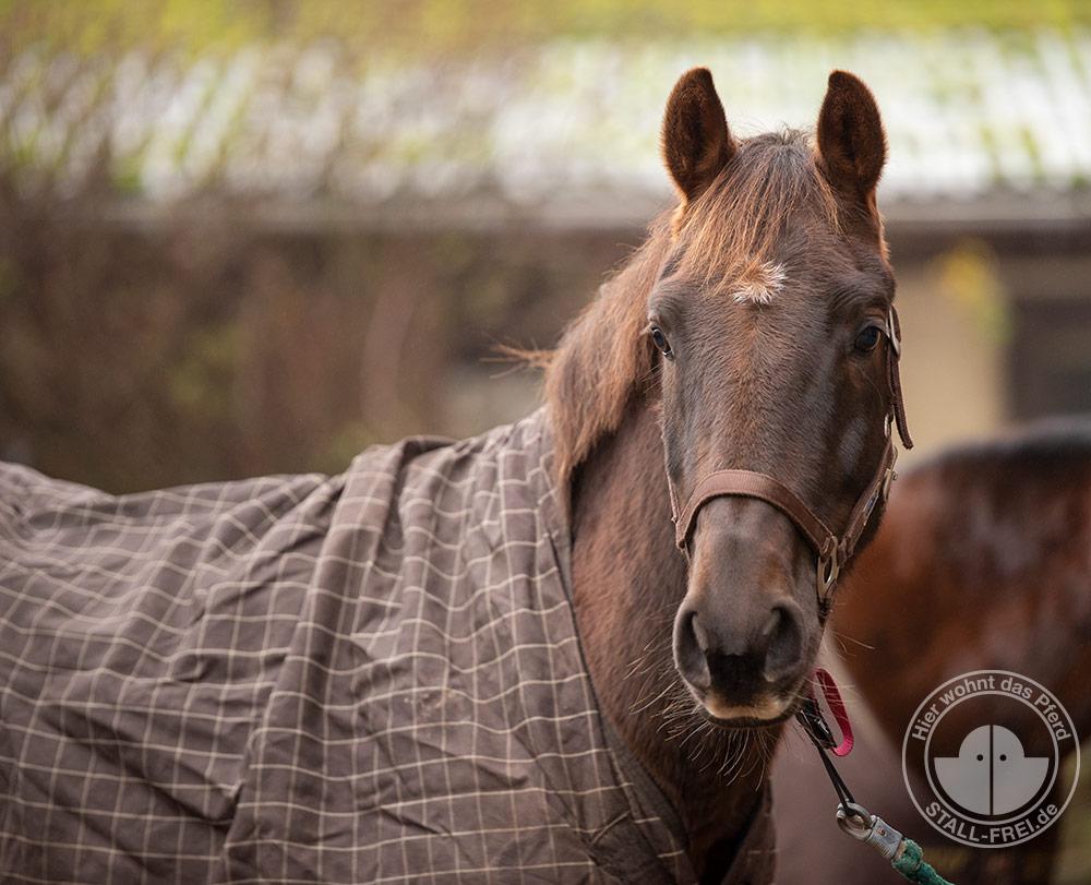 pferde, Pferdeliebe, Pferdedecke, eindecken, Winter, Herbst, Pferdehaltung