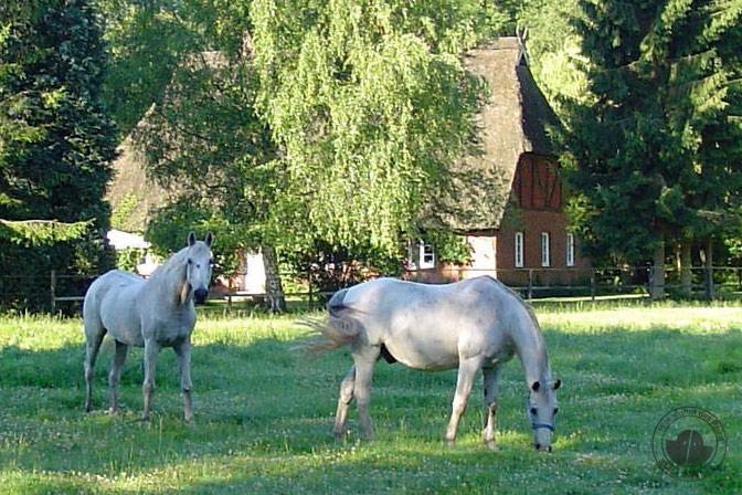 Erinnerungen mein Pferd