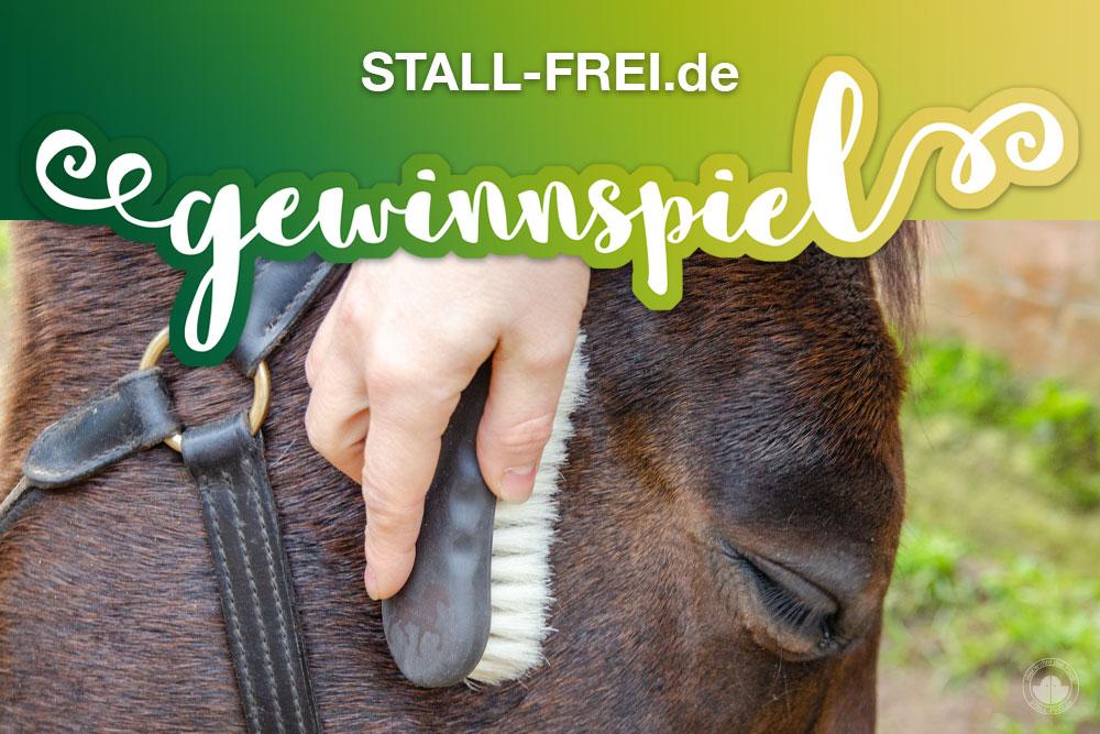 Gewinnspiel massagebürste gesichtsbürste pferd