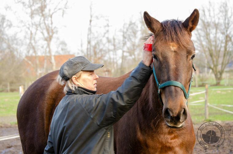 Ist dein Pferd fit für den Saisonstart? - Fellwechsel