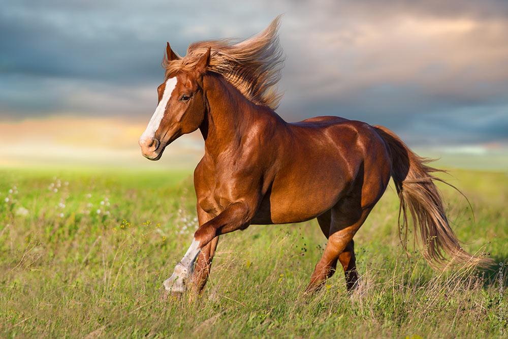 Ist dein Pferd fit für den Saisonstart?