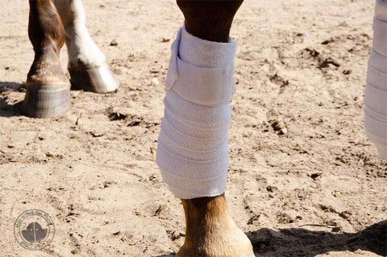 Geschwollene Beine bei Pferden