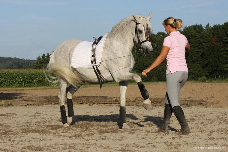Reiterin bildet Pferd aus