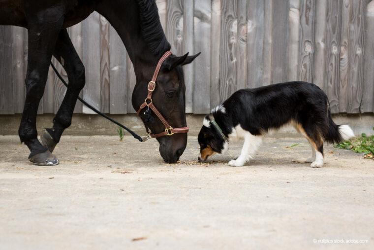 Pferd und Hund fressen zusammen