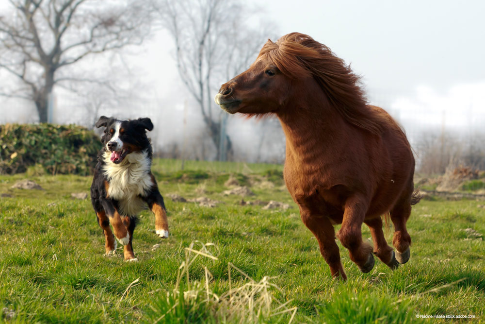 Hund und Pferd laufen Seite an Seite über Weide