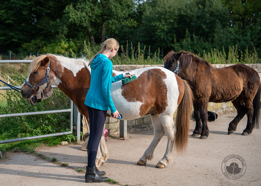 Fellwechsel beim Pferd unterstützen