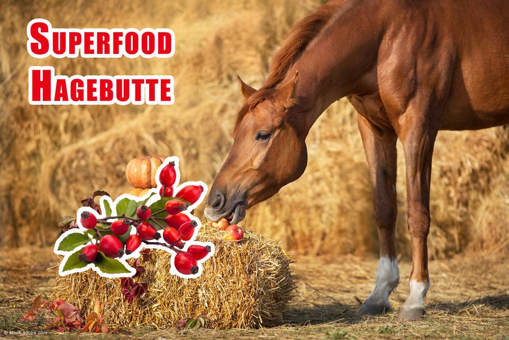 Hagebutten Pferde füttern