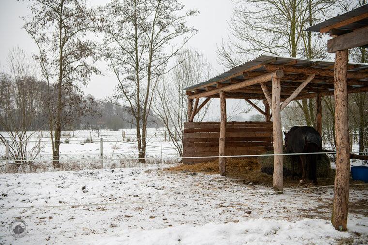 Paddock mit Schnee und Unterstand