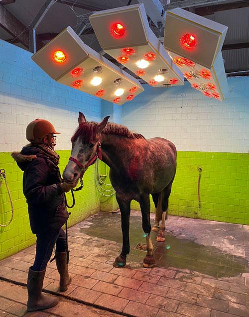 Pferd mit Besitzerin unter Pferdesolarium