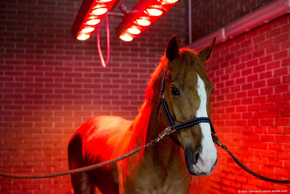 Pferd unter Pferdesolarium