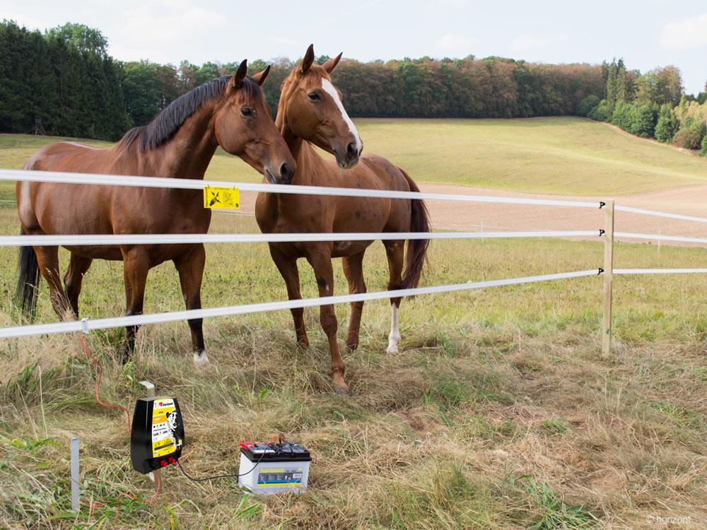Zwei Pferde stehen hinter Weidezaun mit elektrischen Anschluss
