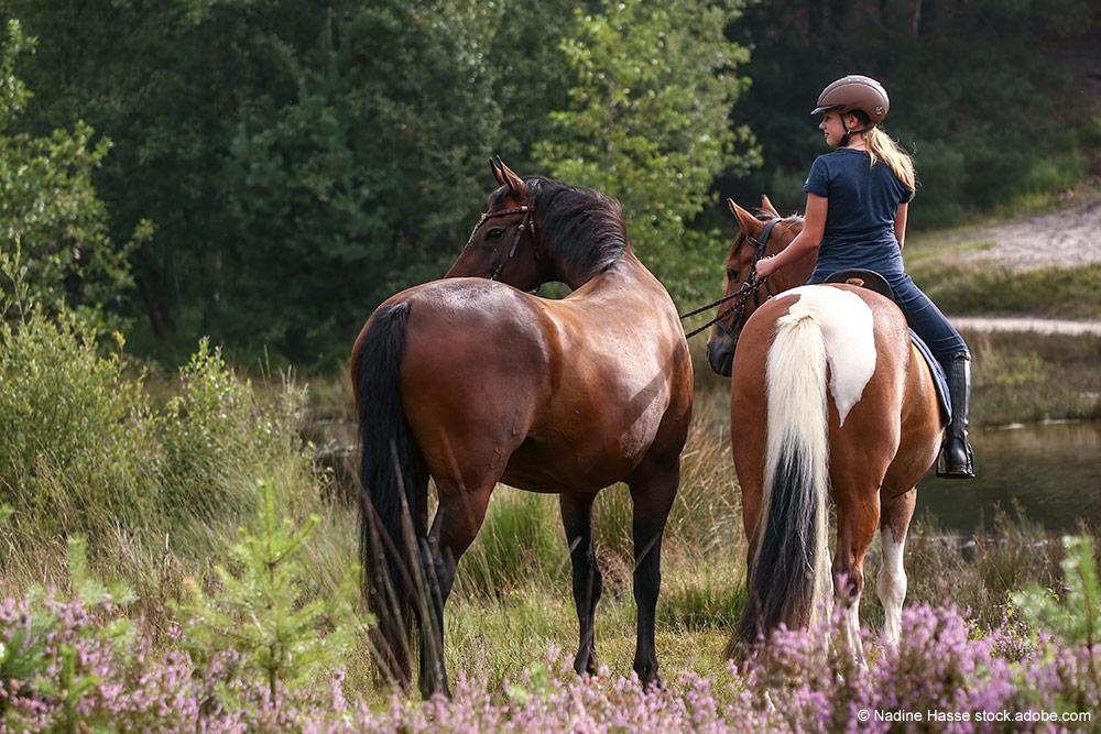 Zwei Pferde in der Heide, eine Reiterin ohne Sattel