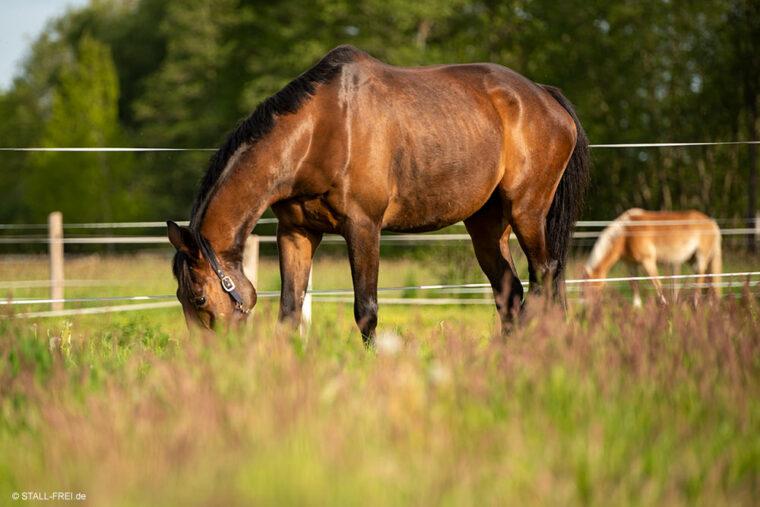 Pferde frisst auf Pferdewiese mit Elektrozaun