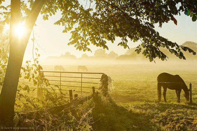 Pferdeweide im Sonnenaufgang mit Tor und Elektrozaun