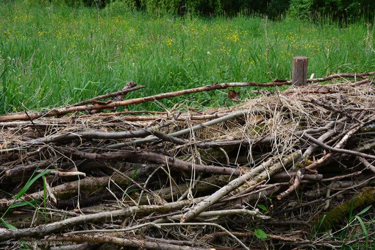 Totholzhecke auf der Weide