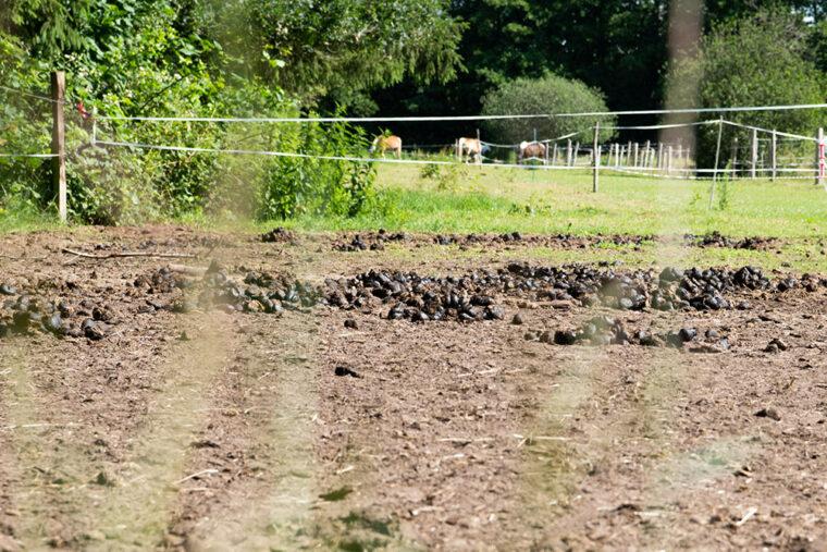 Was tun bei braunen Stellen auf der Weide