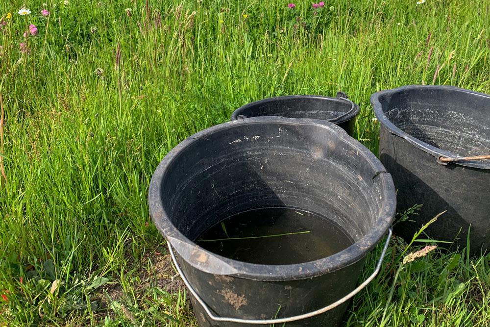 Eimer mit Wasser auf Weide