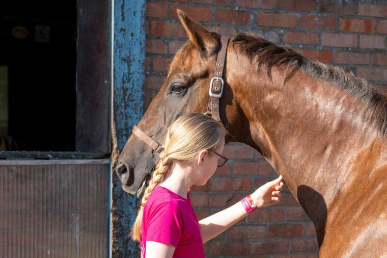 Hautfaltentest beim Pferd - hydriert