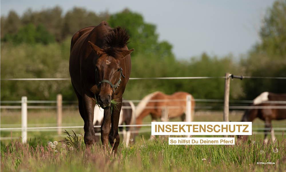 Pferd schütteln Fliegen auf der Weide ab
