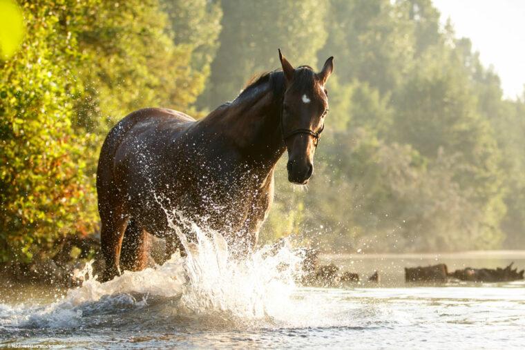 Pferd planscht im Fluss