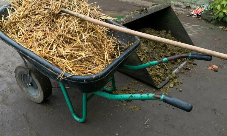 Stroh und Pferdeäppel - Mist richtig lagern