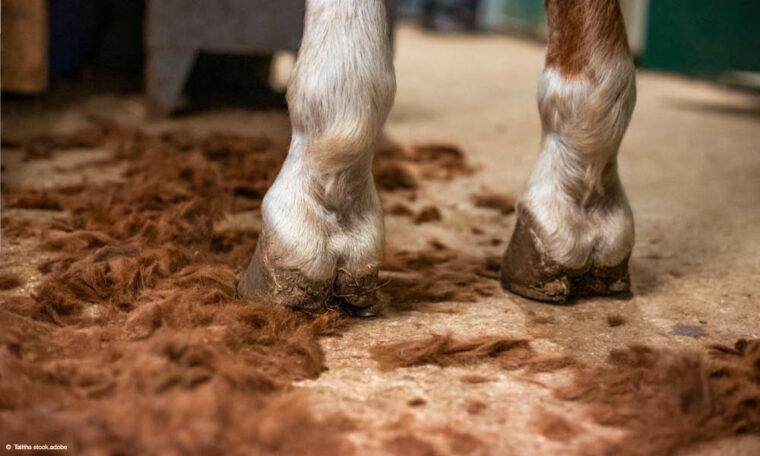 Abhilfe bei Pferdehaaren überall