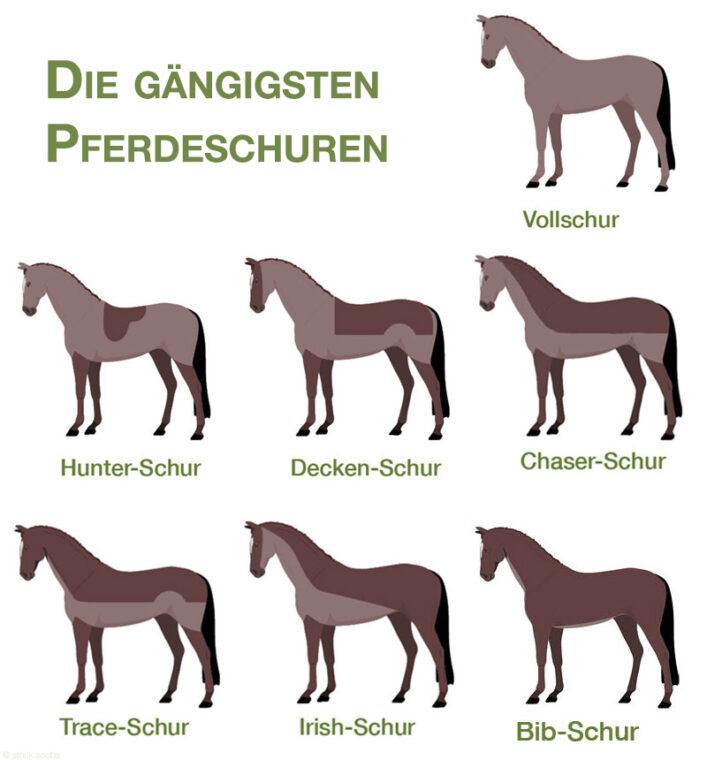 Pferdeschur Arten als Pictogramm in der Übersicht