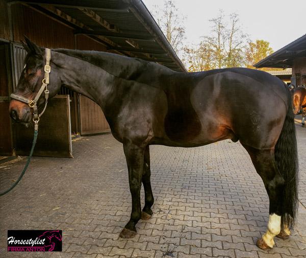 Teilschur mit Sporenschutz von horsestylist Firma Anton